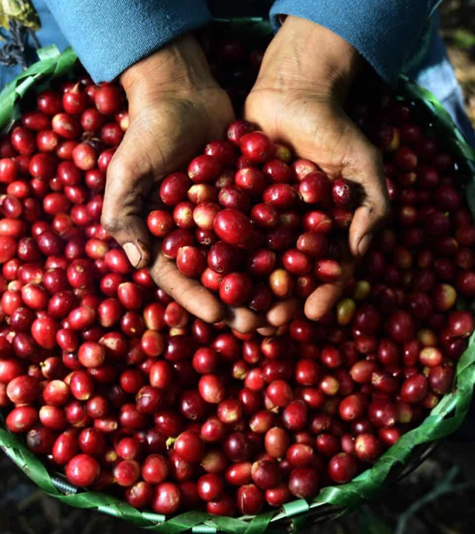 Proyecto progresa - semillas de café