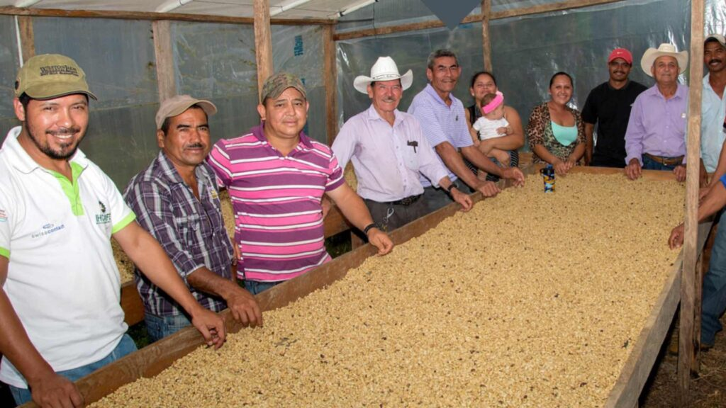 Proyecto Progresa - Historia de éxito: ganancias en café