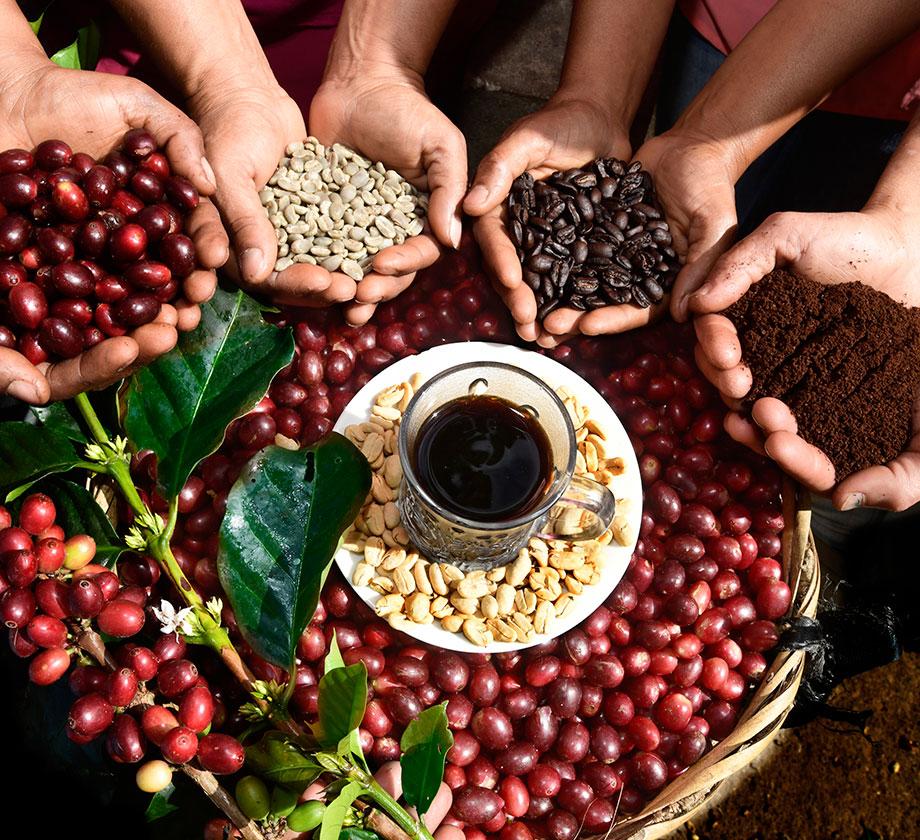 Cafes Especiales El Paraíso