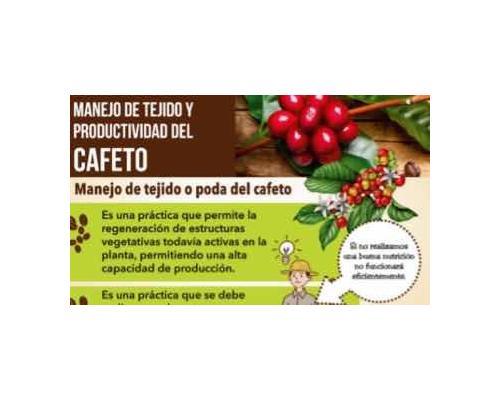 Proyecto Progresa miniartura Tejido del Cafeto