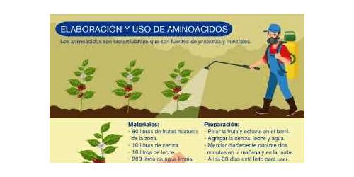 Elaboración y uso de aminoácidos