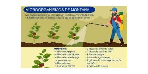 Elaboración y uso de microorganismos de montaña