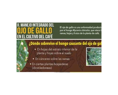 Proyecto Progresa miniartura Ojo de Gallo