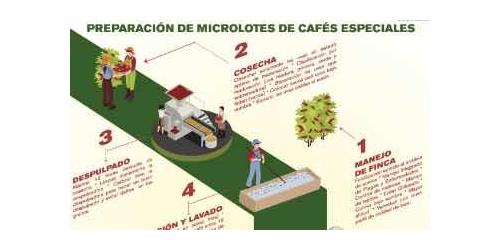 Preparación de microlotes de cafés especiales