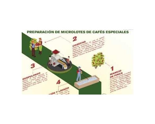 Proyecto Progresa - preparación de MICROLOTES de café